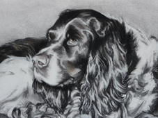 "Detail from Spaniel Portrait, ""Jackson"""