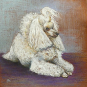 Study of a Miniature Poodle